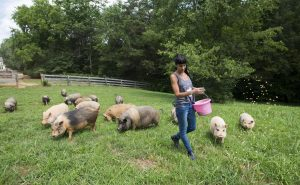 Dina Brigish feeds her pigs at The White Pig Bed & Breakfast on June 20, 2018 in Schuyler, Virginia.